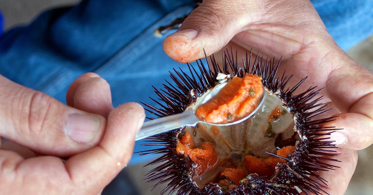 Seis productos del mar de Chile beneficiosos para tu salud