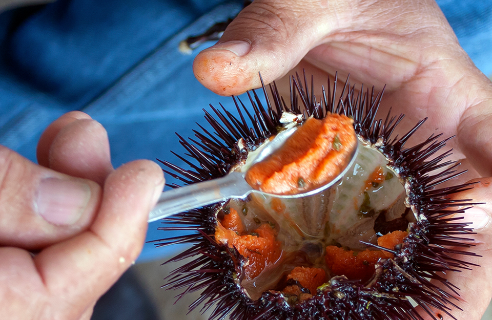 Six Chilean seafood products that are beneficial for your health | Marca Chile