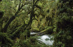 Nuestros bosques sureños: Una sala de clases natural para estudiar los ecosistemas en Chile