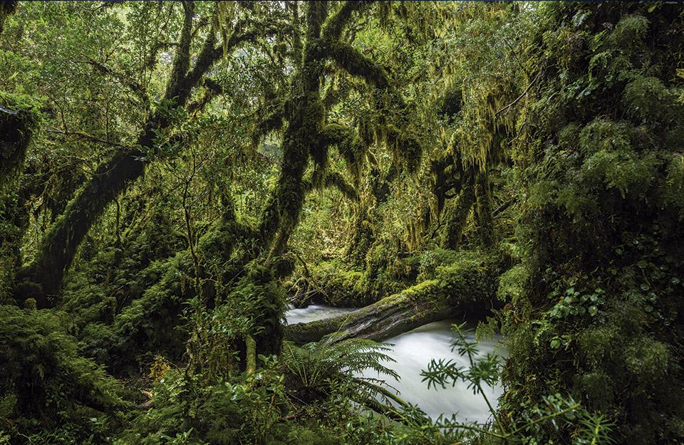 Nuestros bosques sureños: Una sala de clases natural para estudiar los ecosistemas en Chile | Marca Chile