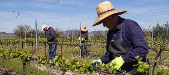 Crece reconocimiento a sustentabilidad de los productos chilenos por extranjeros