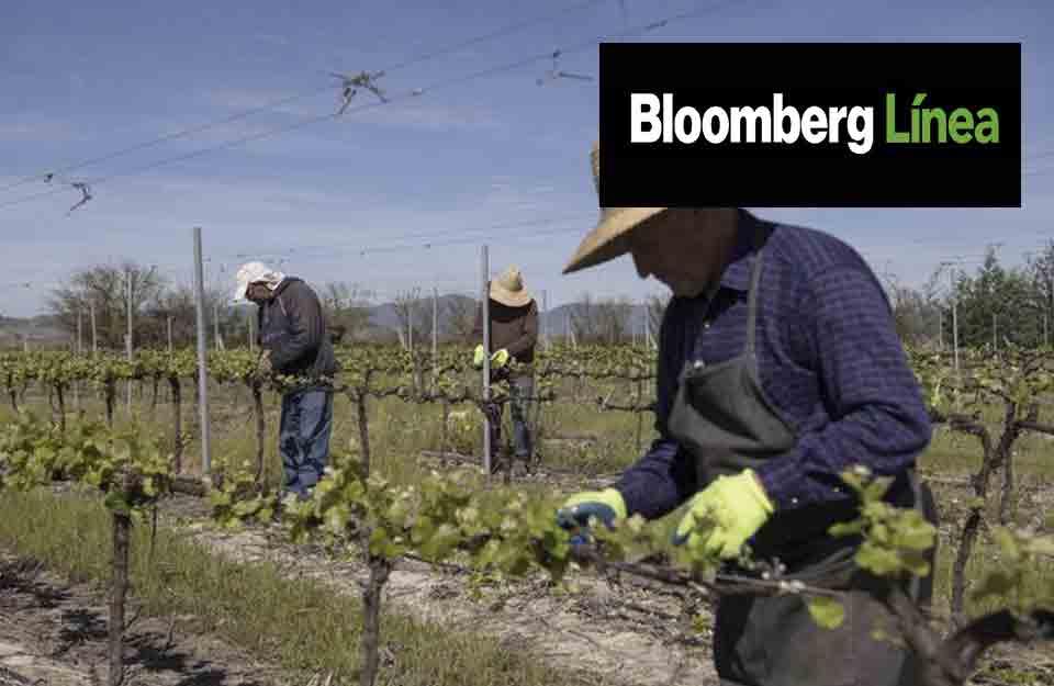 Crece reconocimiento a sustentabilidad de los productos chilenos por extranjeros | Marca Chile