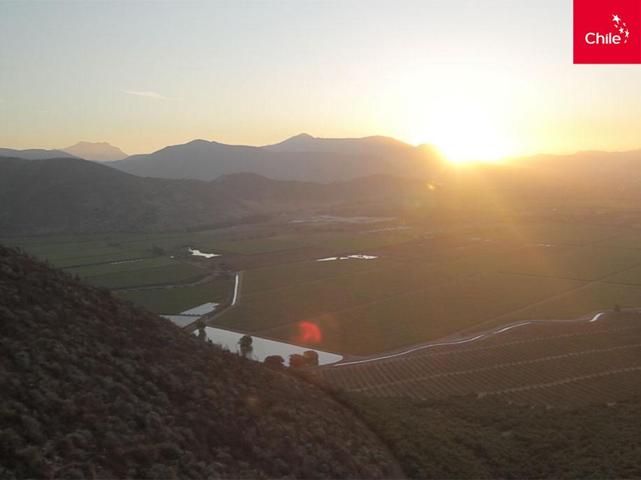 Atardecer en cultivos   Marca Chile   Toolkit