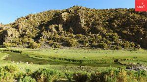 Bofedales del Altiplano | Toolkit | Marca Chile