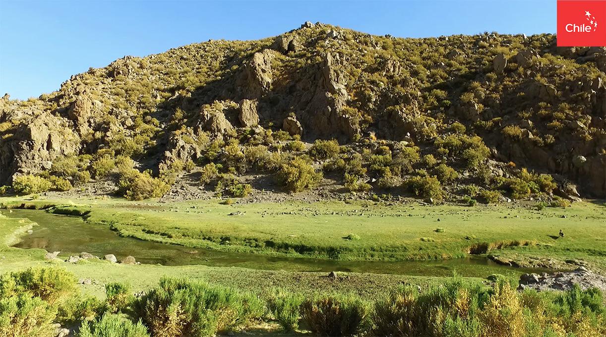 Bofedales del Altiplano | Marca Chile | Toolkit