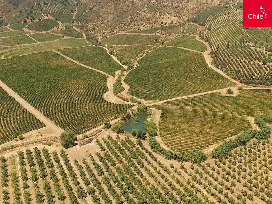 Cultivos en el valle central | Marca Chile | Toolkit