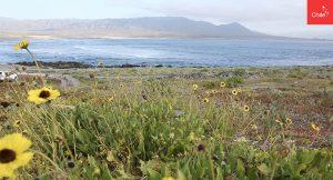 Desierto florido y costa | Toolkit | Marca Chile