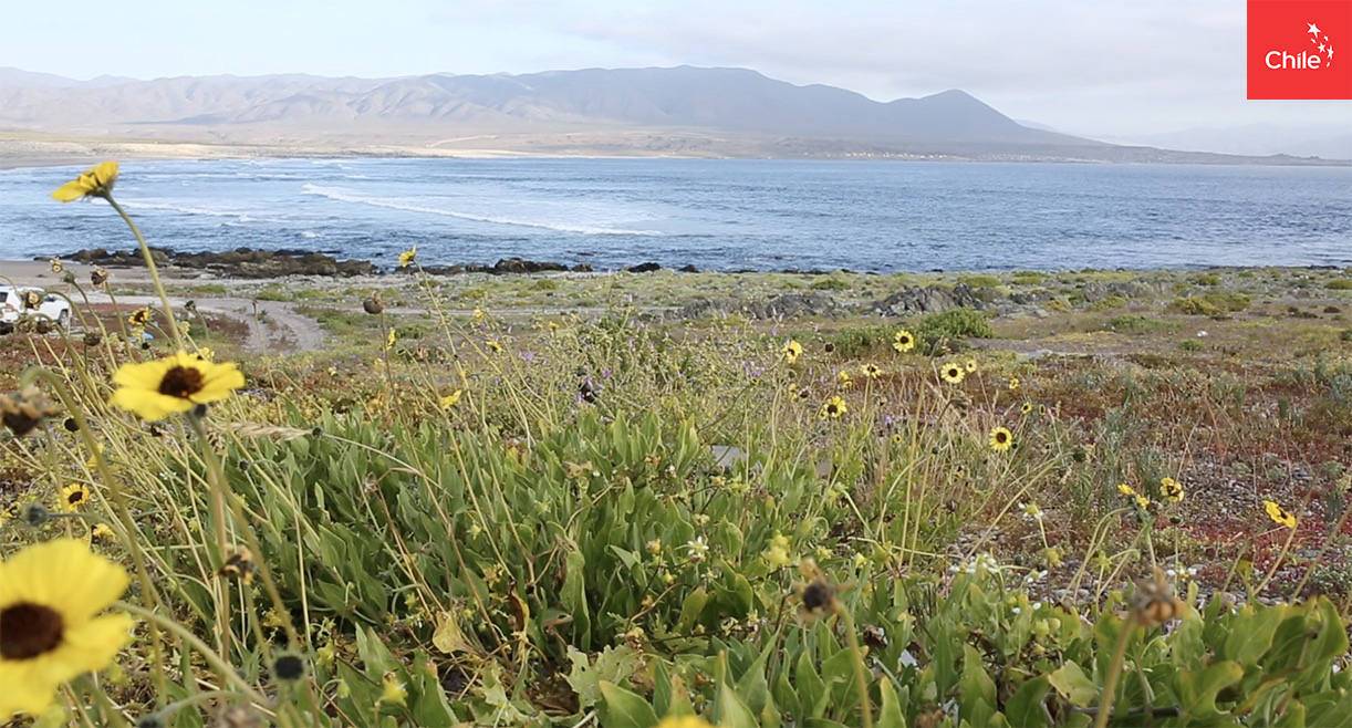 Desierto florido y costa | Marca Chile | Toolkit