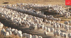 grupo de oveja | Toolkit | Marca Chile