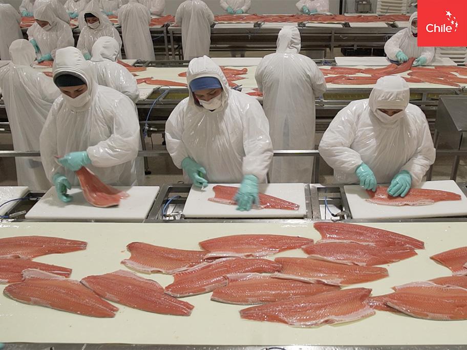 Proceso productivo salmón | Marca Chile | Toolkit