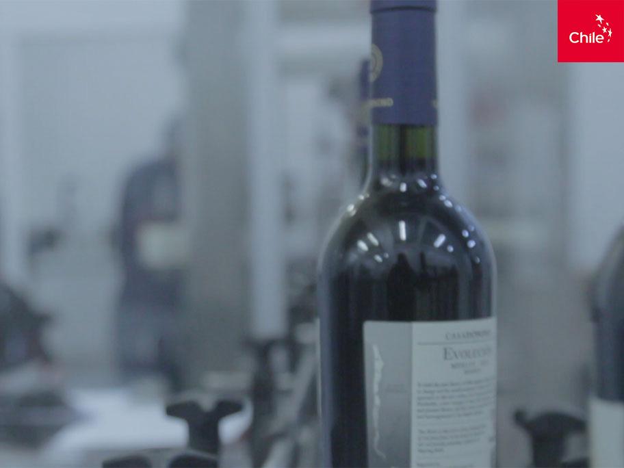 Producción vino | Marca Chile | Toolkit