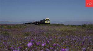 Tren pasa por desierto florido | Toolkit | Marca Chile