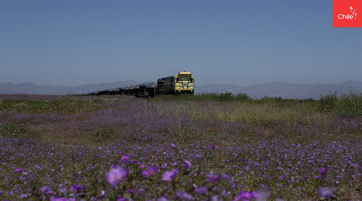 Tren pasa por desierto florido | Marca Chile | Toolkit