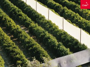 Agroindustria en el Valle del Elqui | Toolkit | Marca Chile