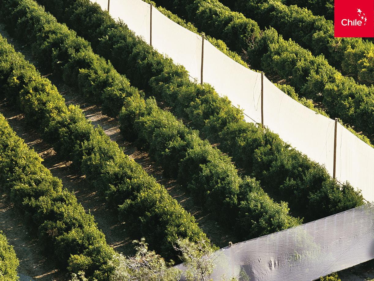 Agroindustria en el Valle del Elqui | Marca Chile | Toolkit