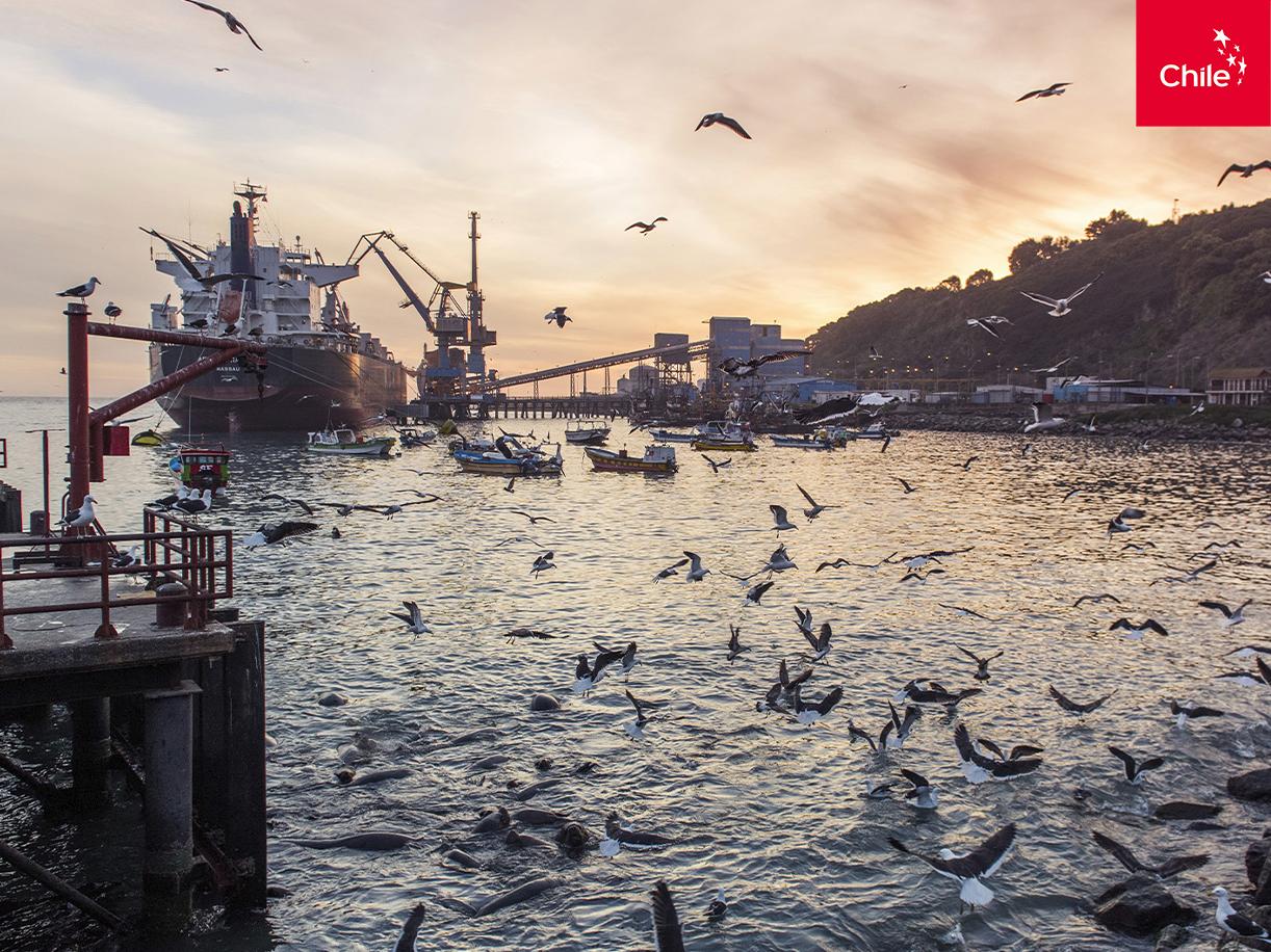 Puerto de San Antonio al atardecer | Marca Chile | Toolkit