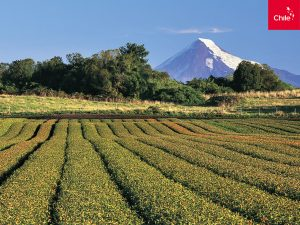 Campos del sur de Chile | Toolkit | Marca Chile