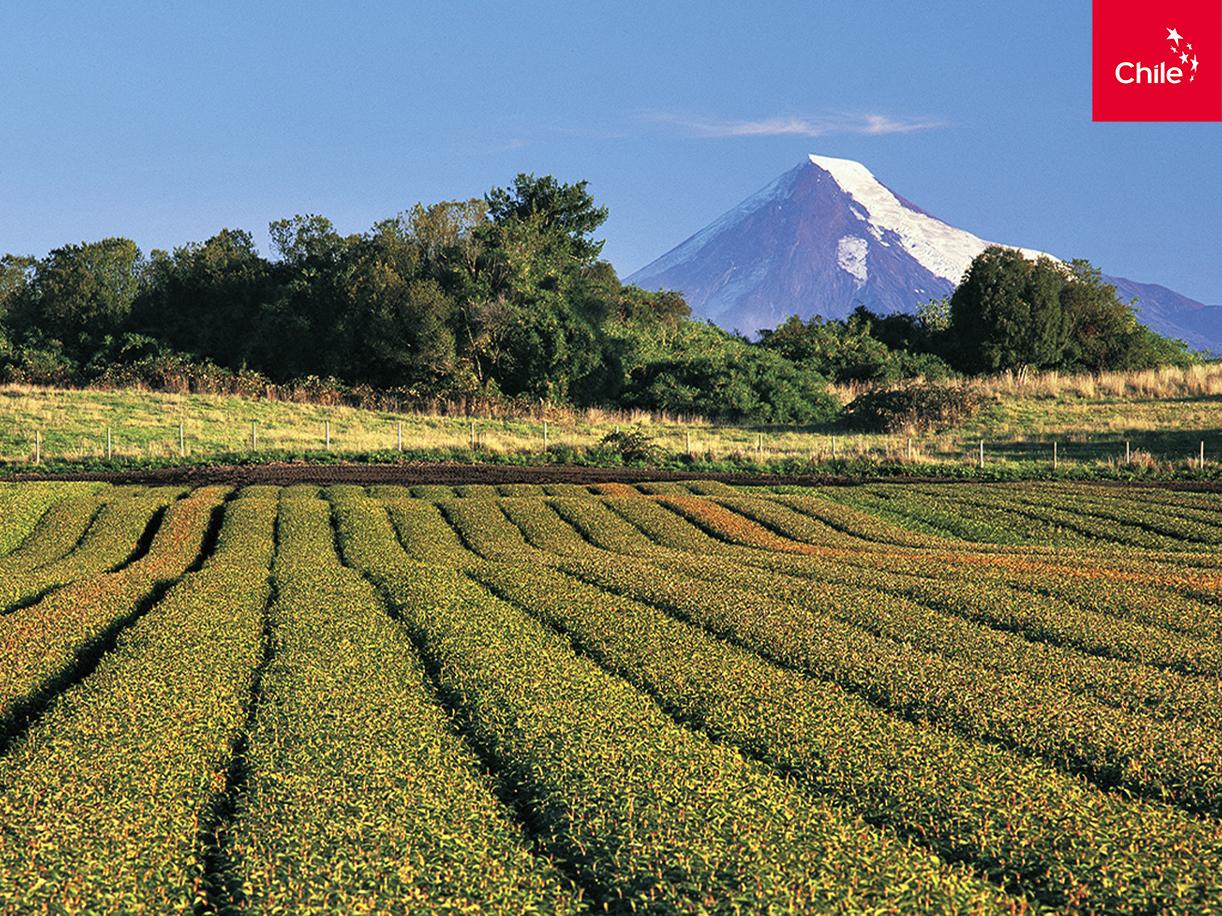 Campos del sur de Chile | Marca Chile | Toolkit