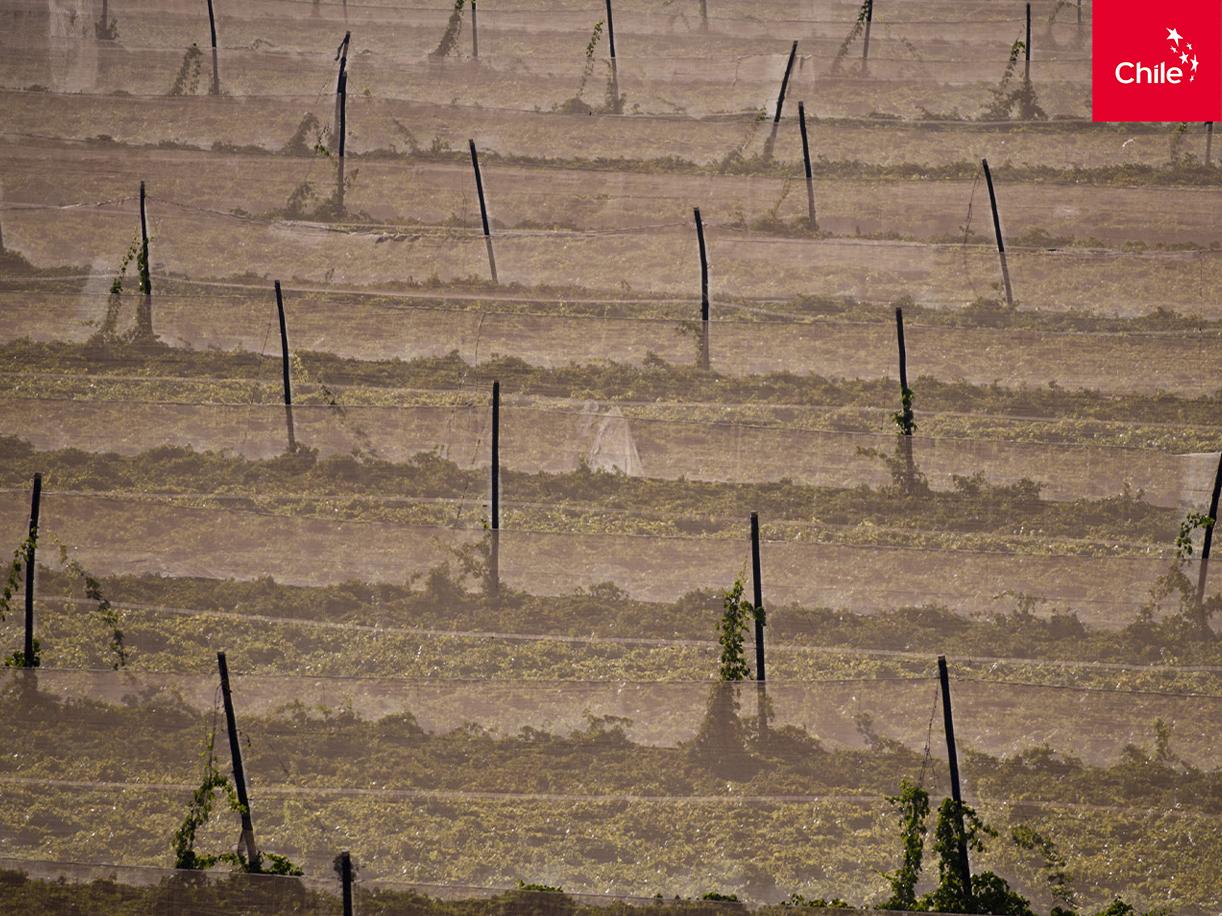 Cultivos en el Valle del Elqui | Marca Chile | Toolkit
