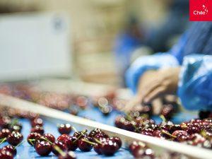 Empaque de Cerezas | Toolkit | Marca Chile