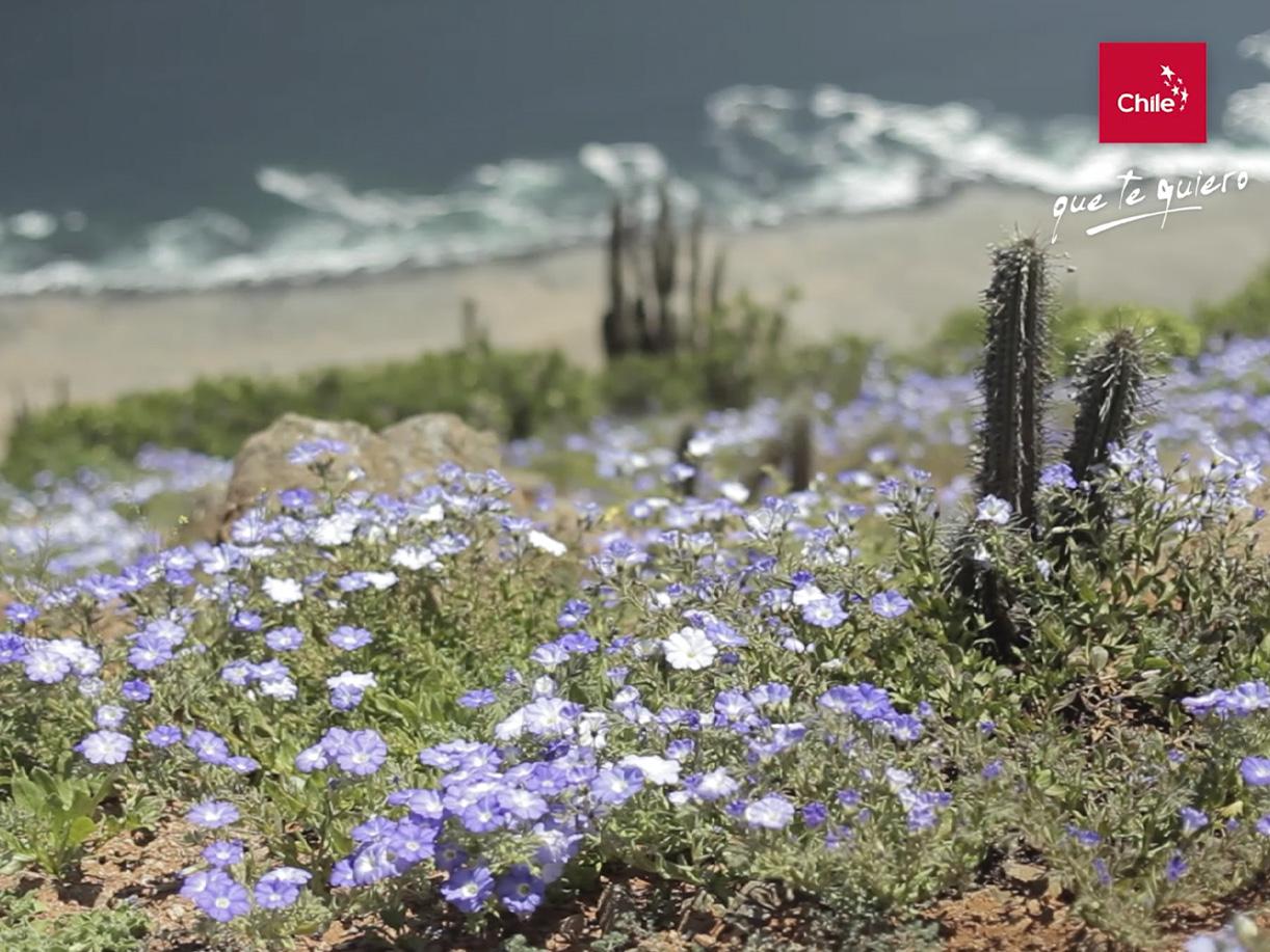 Chile que te quiero: Atacama | Marca Chile | Toolkit