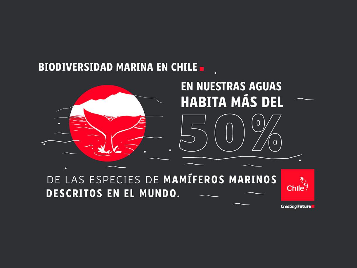 Biodiversidad Marina en Chile   Marca Chile   Toolkit